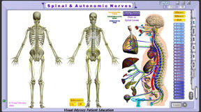 np_spinal_autonomic_thumb