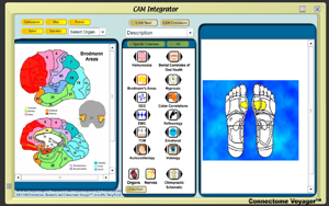 CAM_Integrator-Broadman-Ref